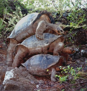 Three Turtles Doin' It